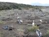 2012sa02-ushuaia-91042
