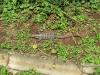 2012sa06-iguazu-2549