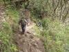 2012sa15-cuzcu-en-machu-picchu-5214