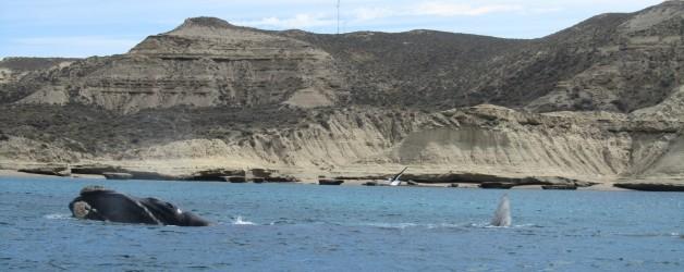 Op walvissenjacht in Puerto Madryn
