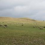 Heuvels bij Viscri
